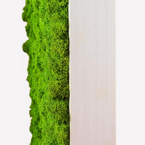 Quadro in lichene cornice bianca abito verde for Cornice bianca foto