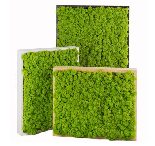 Quadri in muschio stabilizzato un tocco di verde a zero for Verde stabilizzato