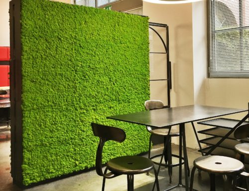 Come rendere un ufficio green con il muschio stabilizzato