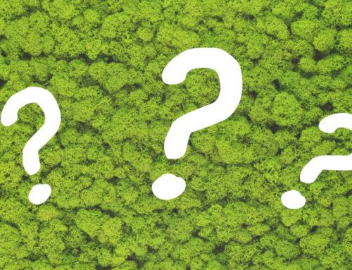 Muschio e lichene stabilizzato: le domande più frequenti