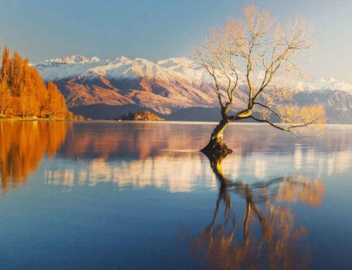 L'albero solitario del lago Wanaka: una fragile meraviglia da difendere